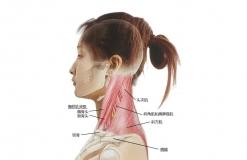 超全,27张图带你认识头、面、颈部骨骼及肌肉名称!