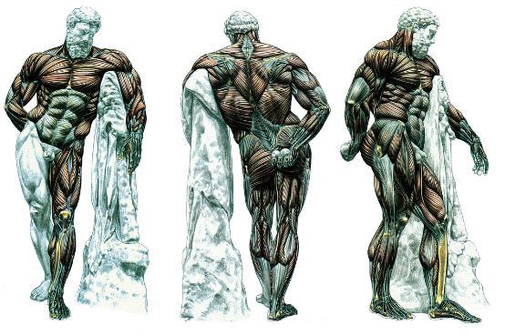 如何制定适合自己的肌肉训练计划?(二)