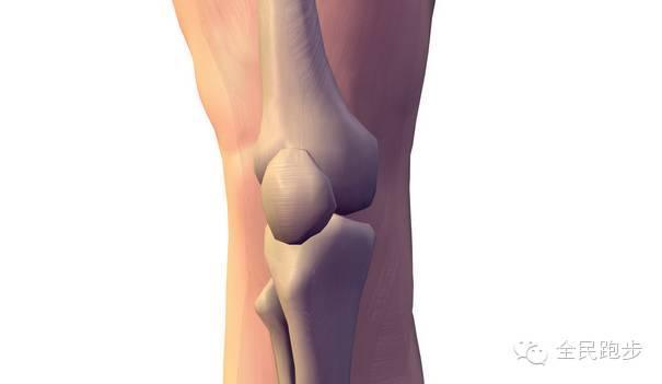 各年龄段如何保养膝盖?全面了解膝关节保护方法